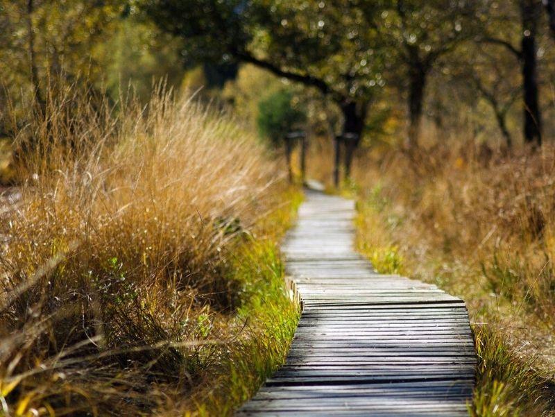 le chemin vers la transition alimentaire