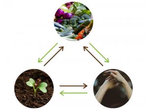 le lien entre l'alimentation, le corps et la Terre