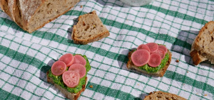 Un apéro au soleil avec du pickles de radis, pesto de fanes et pain des Alouettes des 2 boulangers