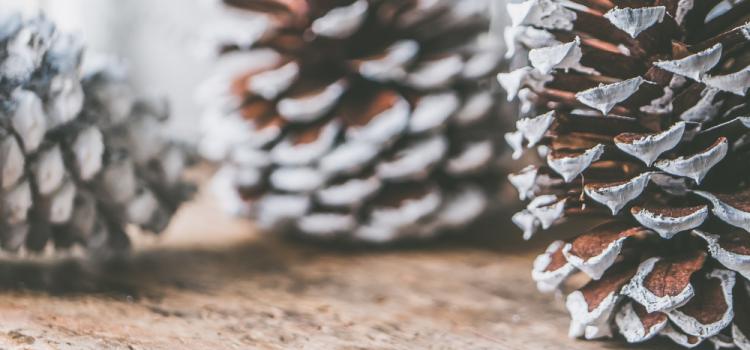Podcast #04 – Comment gérer des fêtes (non) écologiques ?